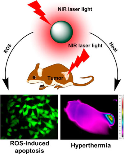 Near-Infrared Photothermal<br /> and Photodynamic Therapeutics