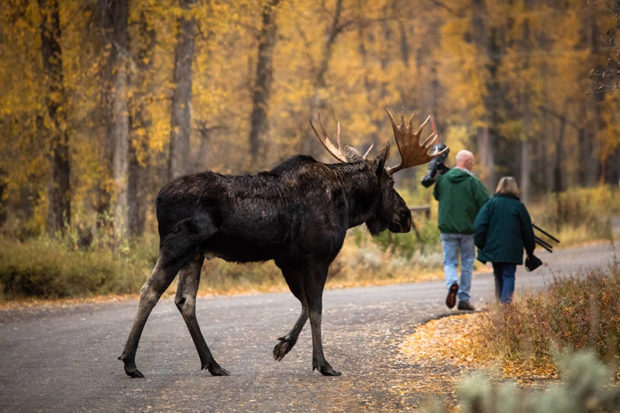 Photo of photographers and a moose.