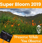 Lake Elsinore's campaign for responsibly enjoying the Super Bloom.