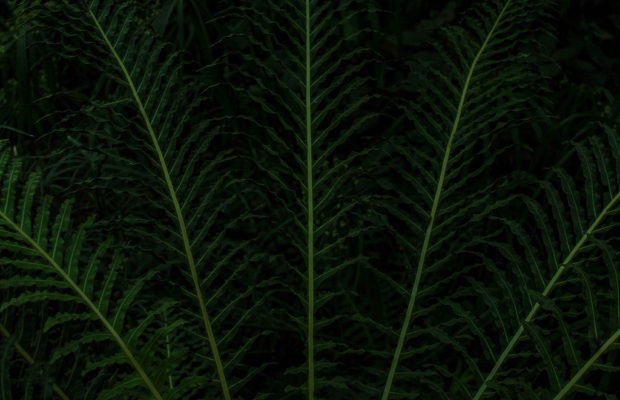 Ferns. This shot has a lot of drama in its simplicity. The framing of the fern leaves create a strong sense of balance and the vibrance of the plant is enhanced against the underexposed background. I also lowered the shadows and lifted the highlights in the shot while editing, enhancing both of these elements. © Nicole Landry.