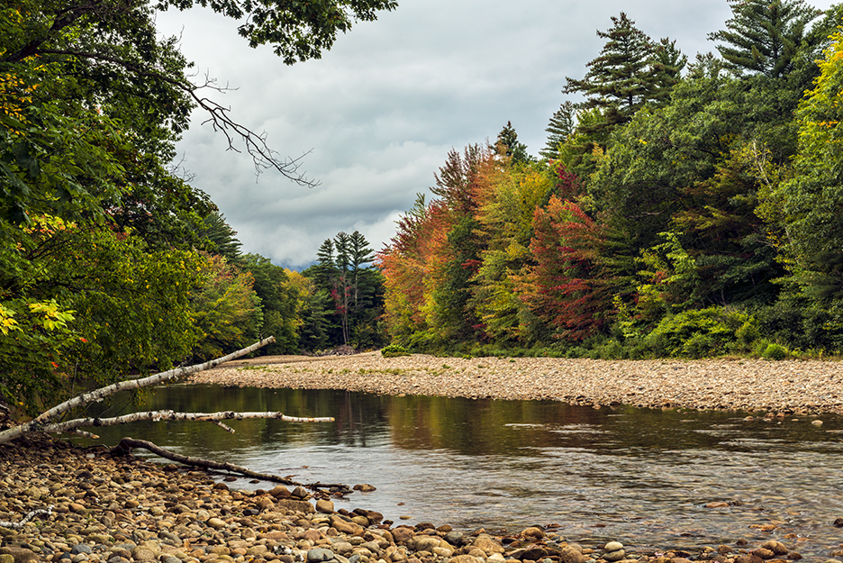 A patch of color along the Saco River in the White Mountains National Forest.
