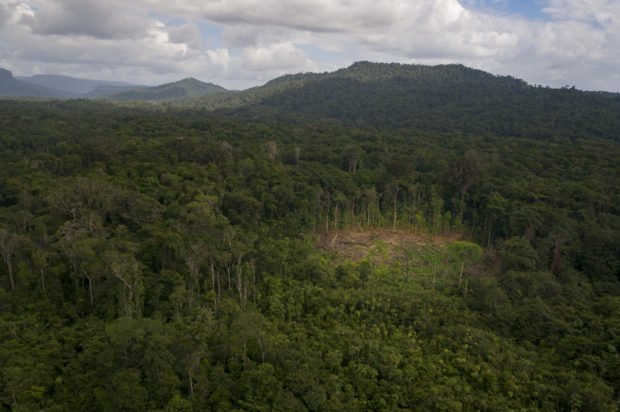 A small portion of the forest is cleared to make room for a village farm - Chenapau, Guyana