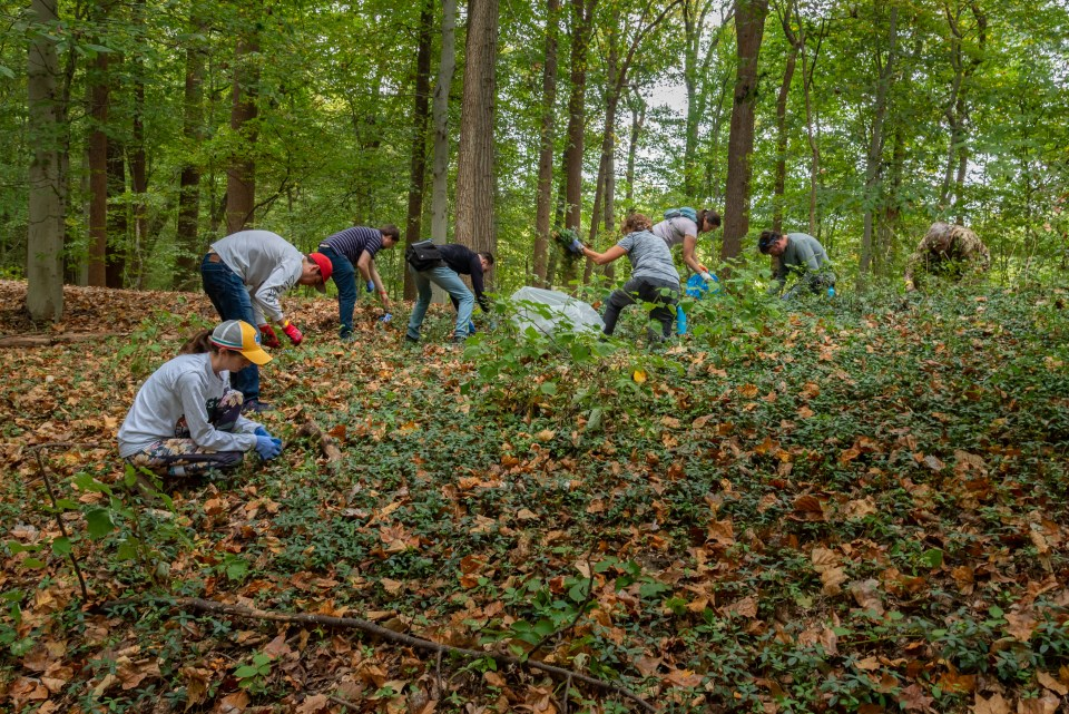 Volunteers in a Rock Creek Conservancy work crew remove invasive plants, giving native species room to grow and sustain insect and animal life.