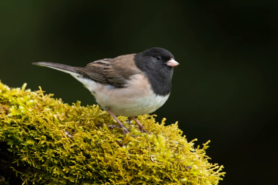 Photo of a bird.  A nice portfolio of bird photographs can be shot right outside your door by using a photography blind and bird feeders.
