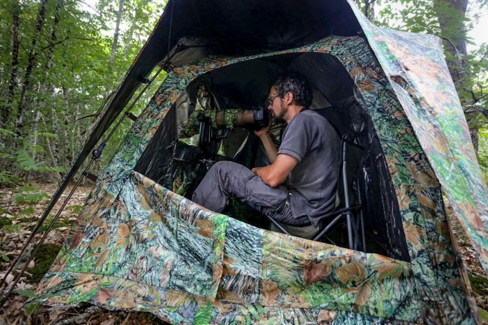 Photo looking inside a blind. The Tragopan Monal is a spacious 2-person photography blind