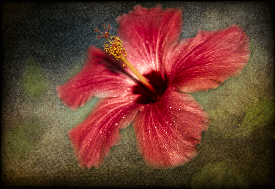 Hibiscus with Texture Effect Applied