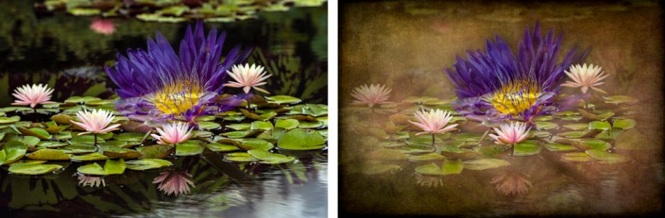 Original waterlily compilation (left) and compilation image with texture applied (right).