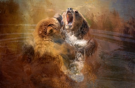 "Showcase 2020 Judges' Choice, Altered Reality: ""Bear Altercation © Betty Sederquist"