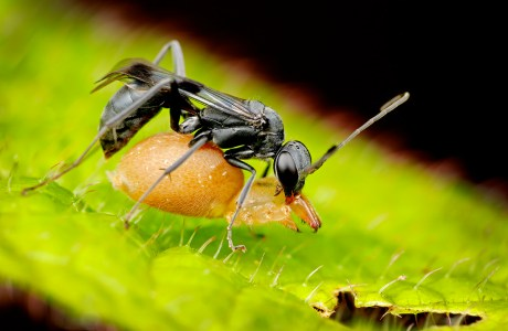 """Showcase 2020 Top 100 winner: """"Spider Wasp with Spider"""" © Tom Myers"""