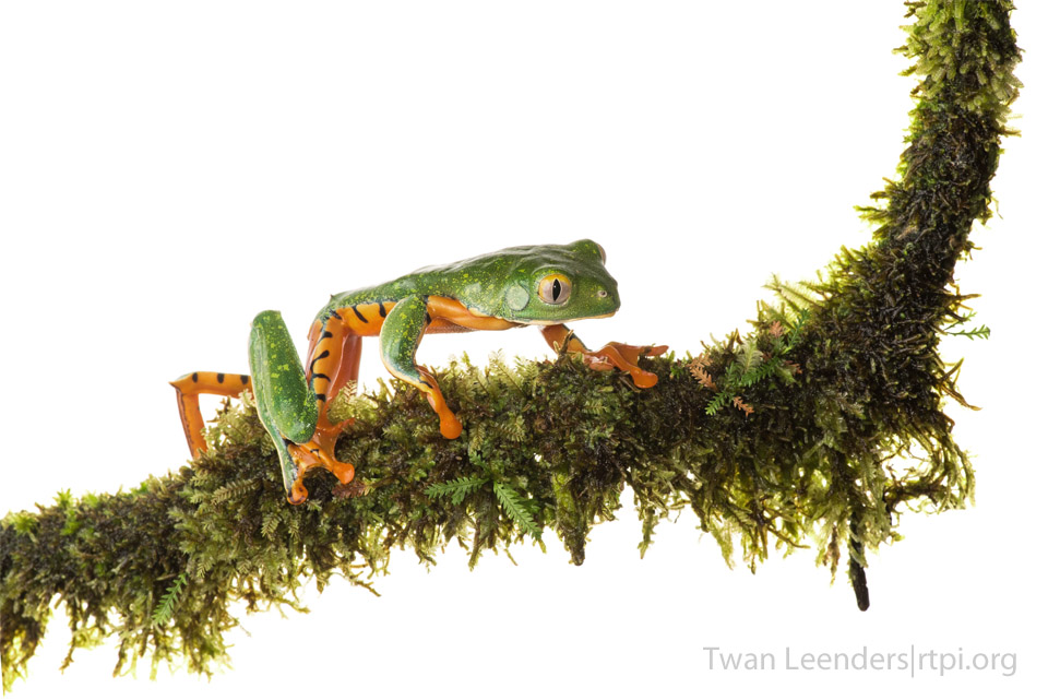 Photo of a frog on a branch, Amphibians and reptiles rarely receive the appreciation and respect they deserve.