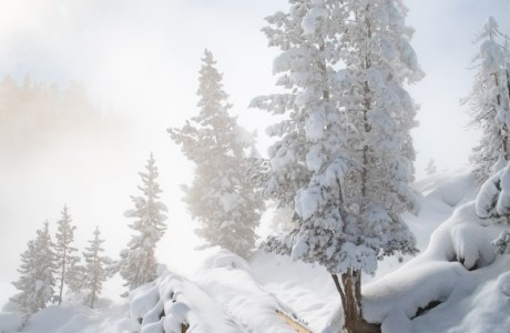 Photo of a snowy scene in Yellowstone with a path winding through the trees. © Kinley Bollinger