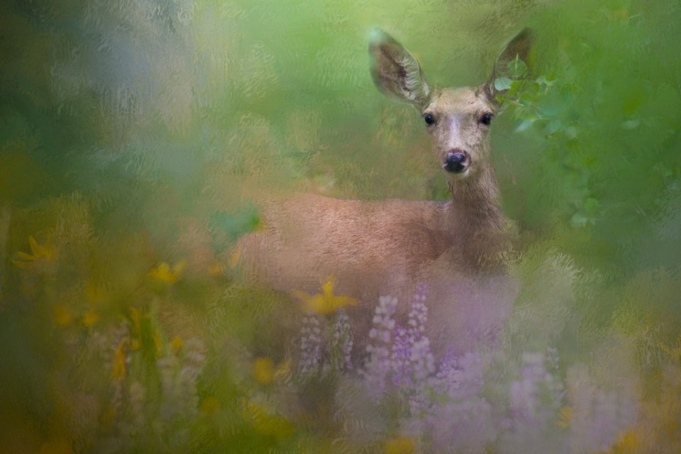 Altered image of doe in springtime flowers by Jan Lightfoot