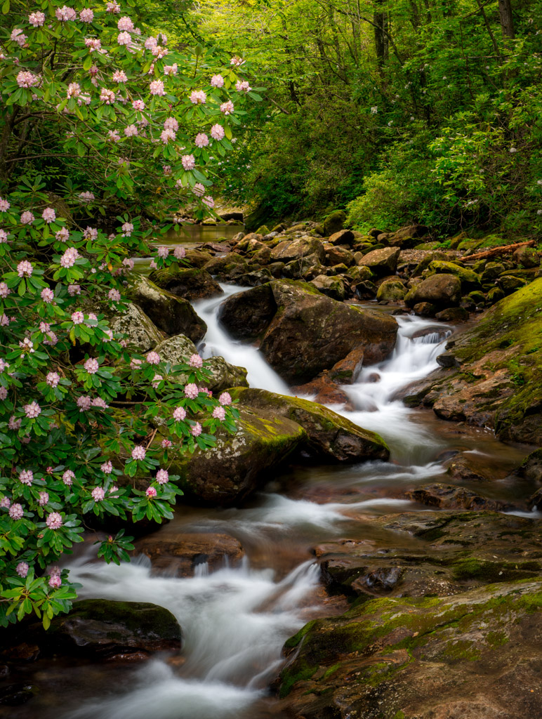Summer Stream below the Blue Ridge Parkway, image by Mark Hoyle