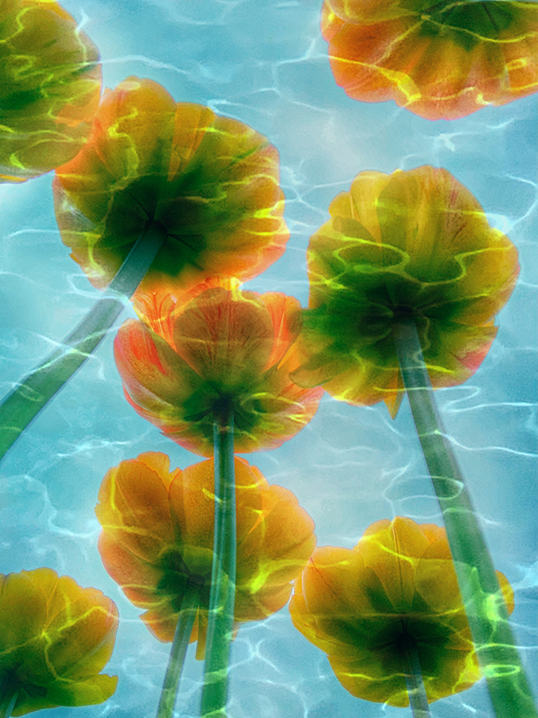 Tulip image layered with swimming pool image, created by Melissa Fraser