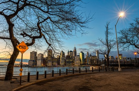 Ominous-Looking Tree Overlooking Manhattan Skyline © F. M. Kearney