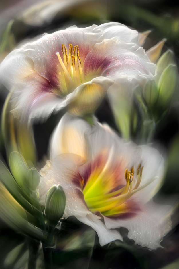 Daylilies with Radial Blur Filter (Spin mMethod) Applied © F. M. Kearney