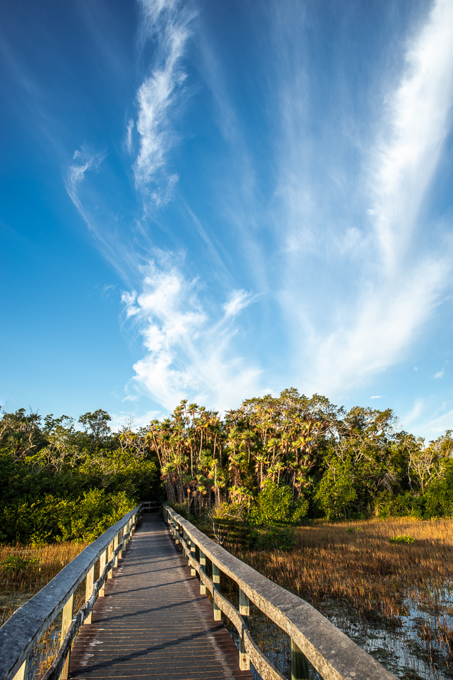 Photo of a boardwalk leading to a group of trees under a partly cloudy sky. Charming Mahogany Hammock in Everglades National Park, Florida.