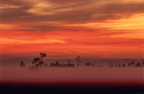 Early morning ground fog in the swamps of Everglades National Park, Florida.