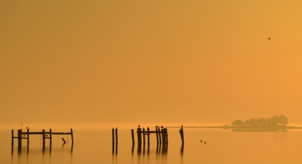 Gold light adorns Johnson Bay after sunrise, Taylor Landing, Maryland. © Jim Clark
