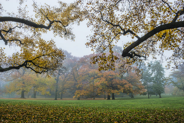 Fall foliage in dense fog New York Botanical Garden