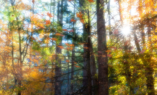 Fall in the Great Smoky Mountains National Park. This was taken in the campground in Cataloochee Valley. It was so dry that year that there were few foggy mornings. What you see here is campfire smoke. © Tom Haxby