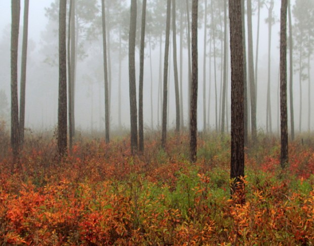 Foggy autumn morning by Lana Gramlich