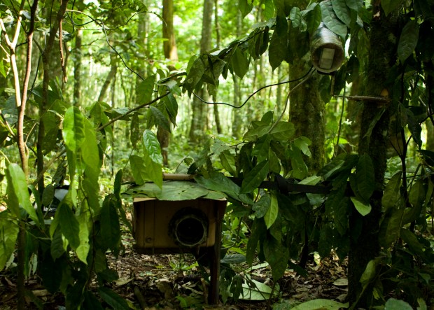 SLR Camera Trap in Tropical Rainforest © Sebastian Kennerknecht