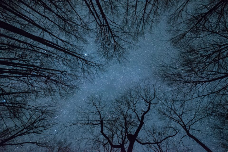 Starry Night in trees, Shenandoah NP © Joyce Harman