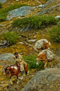 Horses and mule pack trail, King's Canyon
