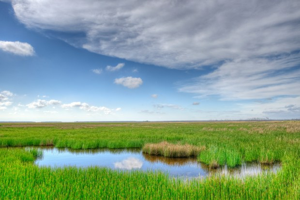 Marsh Landscape, Fishing Bay Wildlife Management Area, Maryland