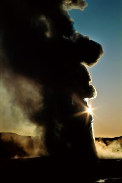 World famous Old Faithful geyser erupting on a clear Wyomong morning in Yellowstone National Park, Wyoming.