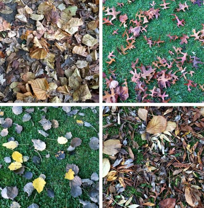 Couleurs d'automne au Parc de Procé à Nantes