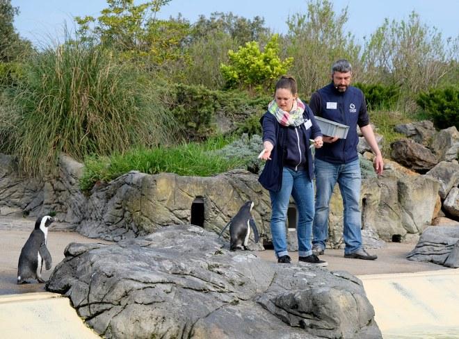 Visite de l'Océarium du Croisic avec les manchots du Cap