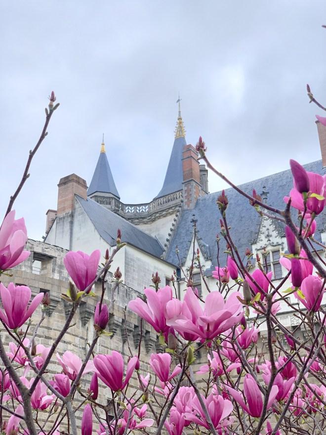Les arbres en fleur au printemps à Nantes