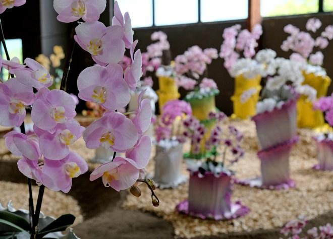 Orchidées aux Floralies de Nantes