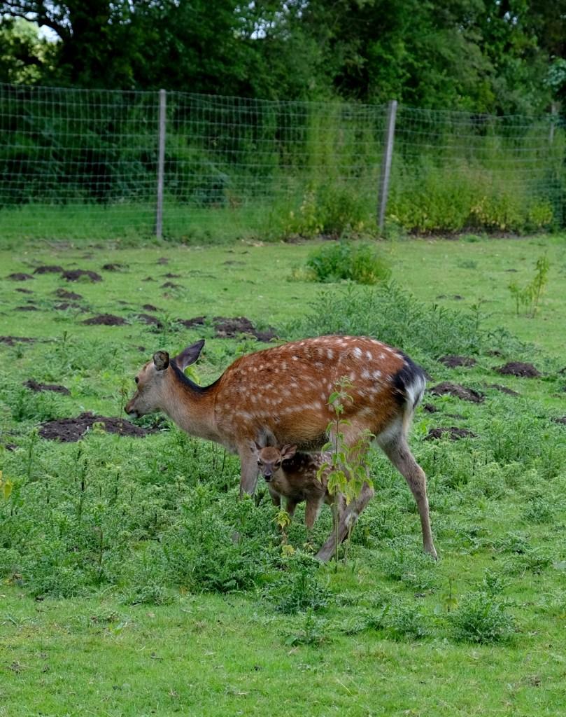 Legendia Parc, parc animalier près de Nantes