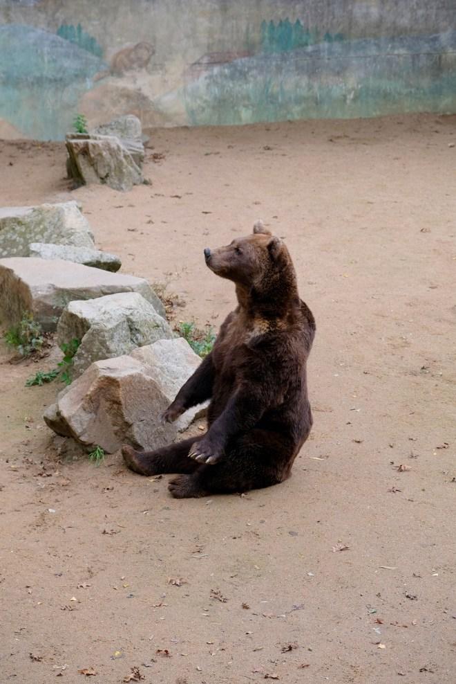 Ours au zoo de la Boissière du Doré