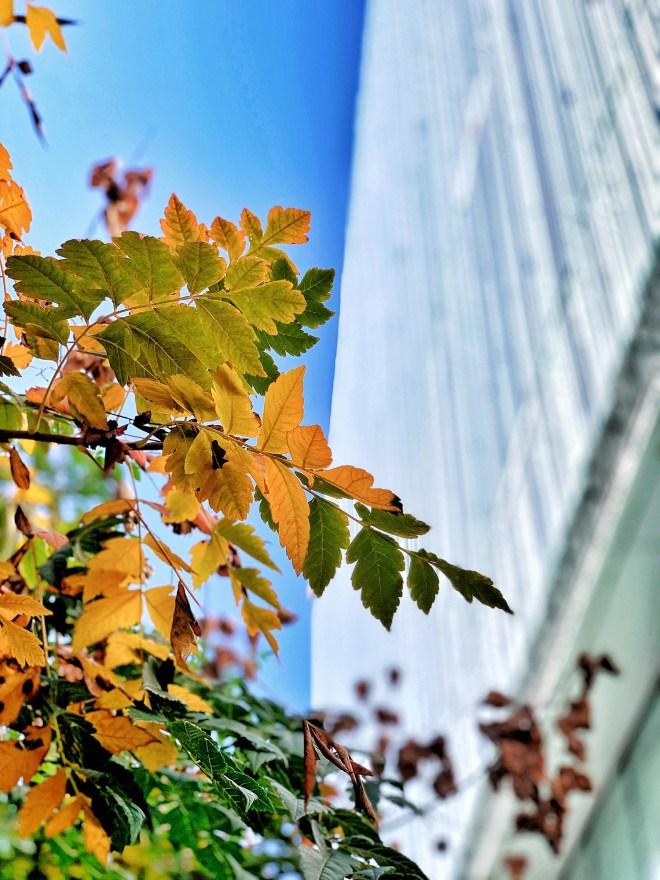 Nantes en automne