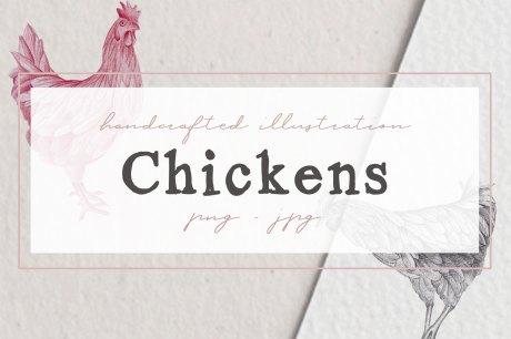 Hand drawn Chicken Illustrations