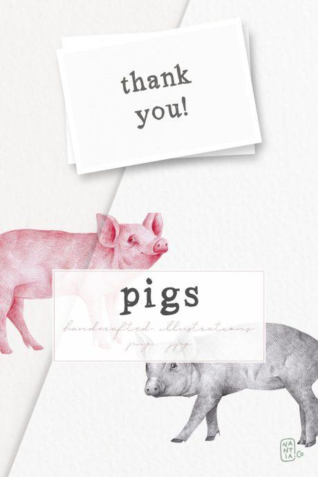 Hand drawn Pigs Illustrations
