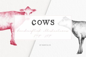 Hand drawn Cow Illustrations