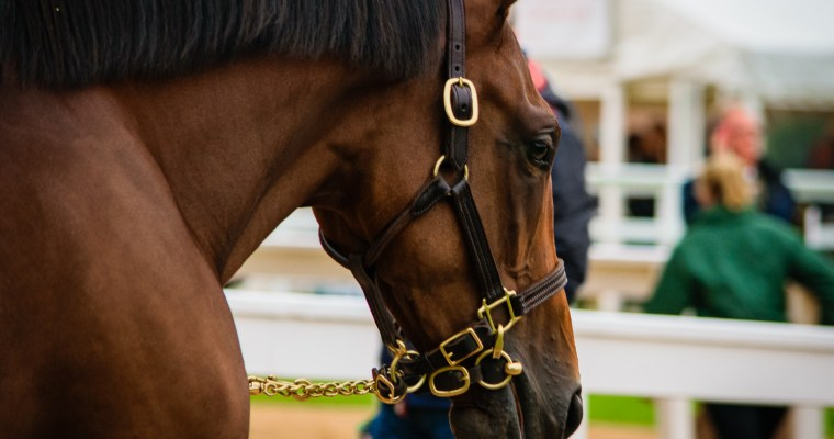 Autumn, time for the Tattersalls October Yearling Sales