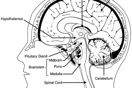 Interior areas of brain full hd maps locations another world the human brain anatomy wernicke s area auditory association area an excellent map of the areas of the brain occupational therapy brain stem posterior view ccuart Image collections