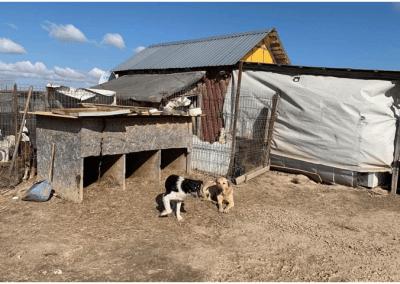 Neue Hütten für Oradea/Rumänien