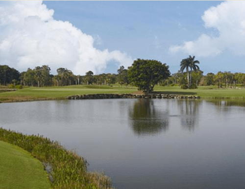 royal poinciana Naples