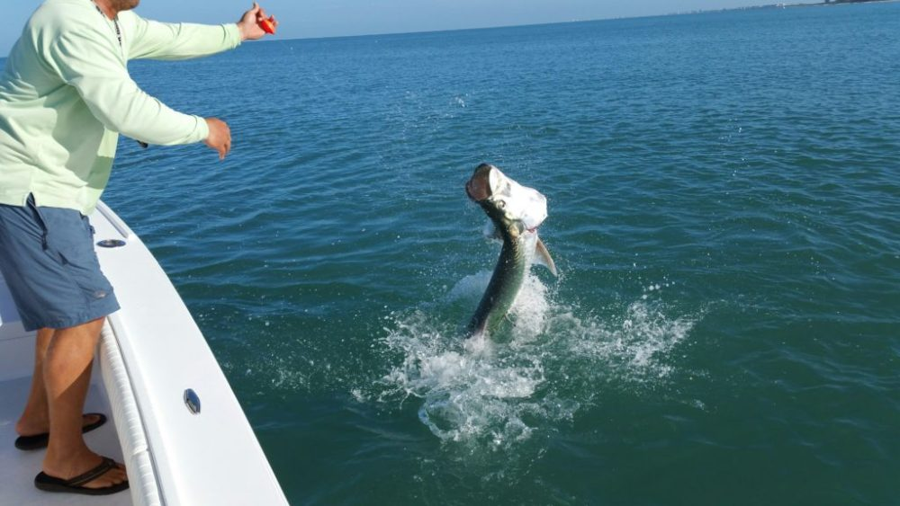 Tarpon Fishing in Naples, FL