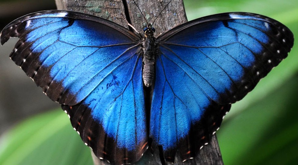 Zoo di Napoli, le Farfalle