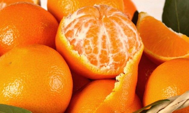 Arriva la Festa del Mandarino dei Campi Flegrei 2019
