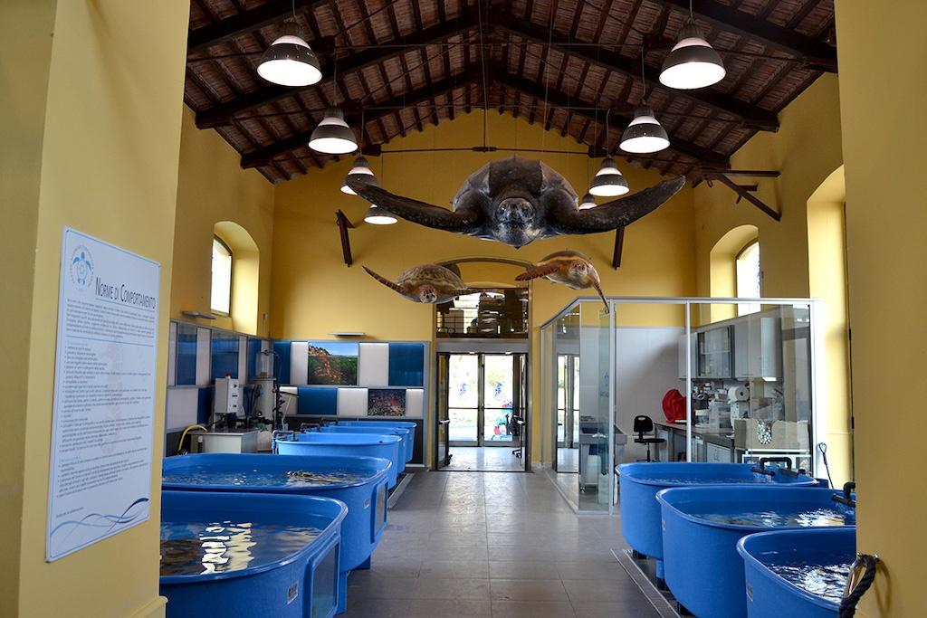Centro Ricerche Tartarughe Marine di Portici