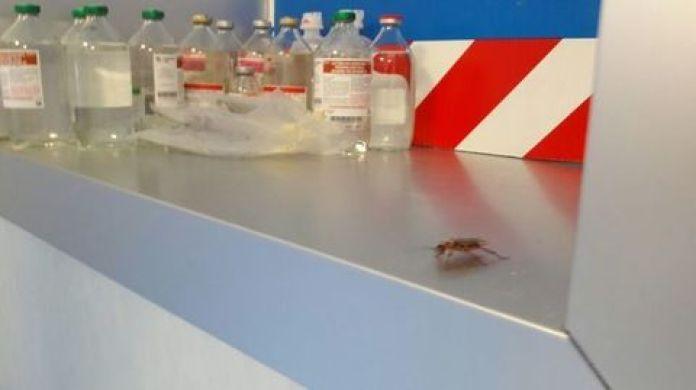 Ospedale San Giovanni Bosco: invasione di scarafaggi